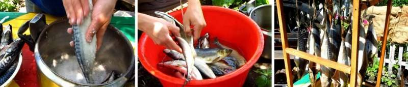 как замариновать рыбу для холодного копчения в коптильне